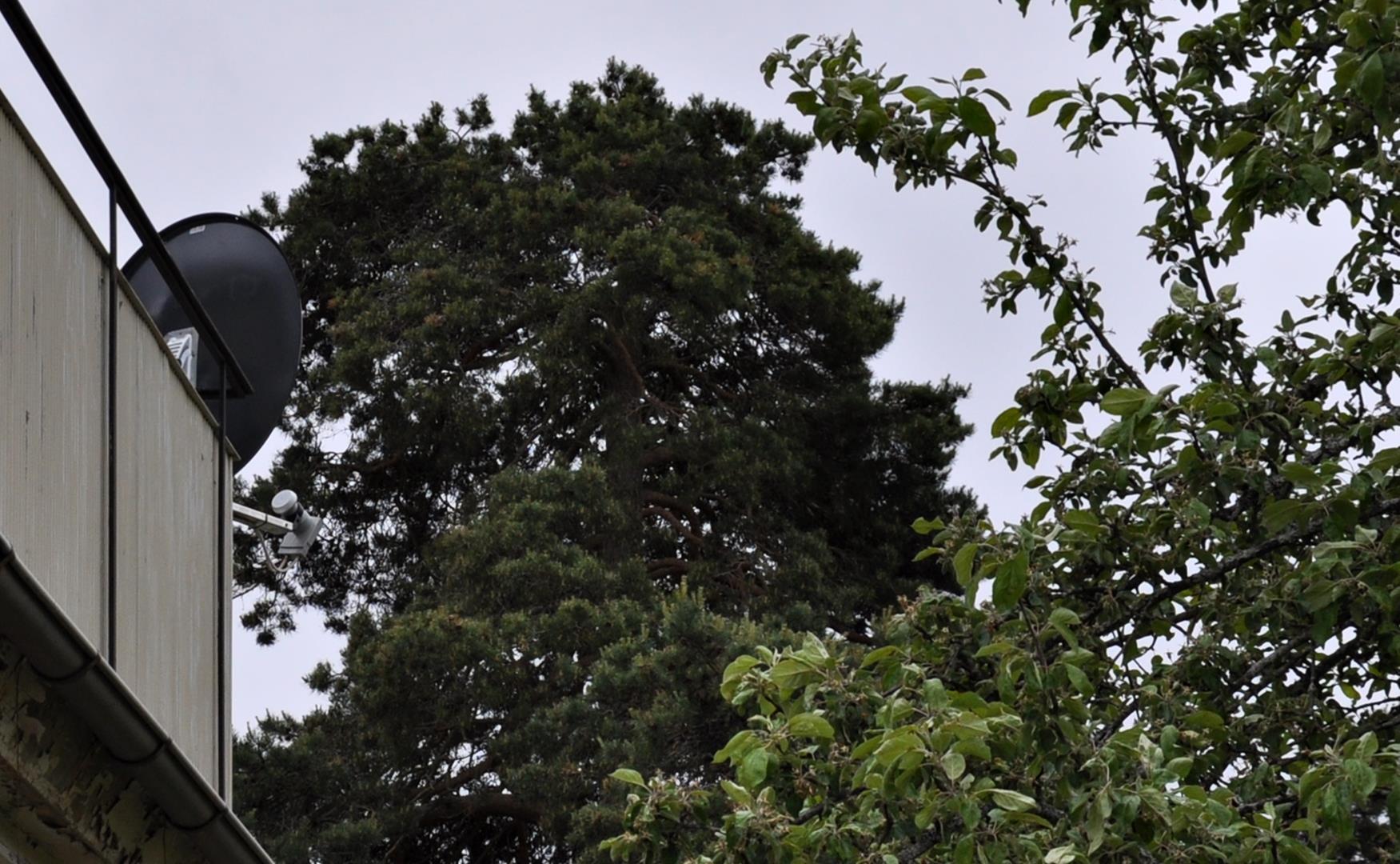20160610-727388-trees